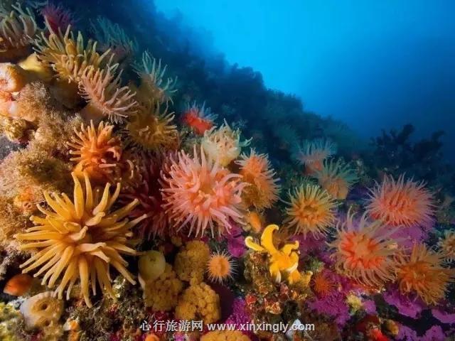 西沙群岛中国最美丽的海